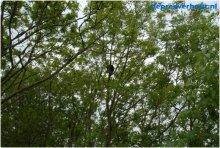 Kat uit de boom met hoogwerker